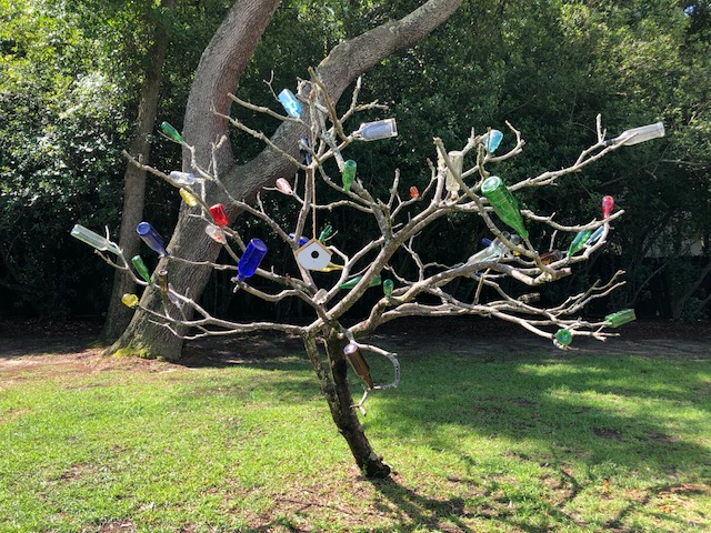 bottle tree-May